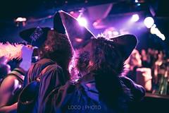 8M5A3813-38 (loboloc0) Tags: furries frolicparty frolic party furry club dance suit suiter fur fursuit dj sf san francisco indoor people costume performer animal blur portrait
