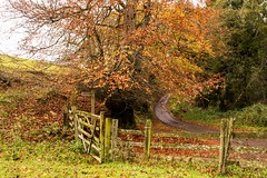 Autumn wandering (odell_rd) Tags: alnwick northumberland autumn fence rugleywood coth5