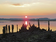 Seaweed and Sunset (Skoda Girl) Tags: sunset reflections water sky clouds light bright shoreline river ald aldeburgh suffolk old jetty rotting wood silhouette orange pink red black green seaweed rocks sun setting nature landscape horizon birds flying flight