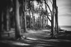 spooky forest (hansekiki) Tags: mecklenburgvorpommern nienhagen wald baum bäume squeezerlens canon 5dmarkiii sw strand beach volna3 sovietlens balticsea ostsee