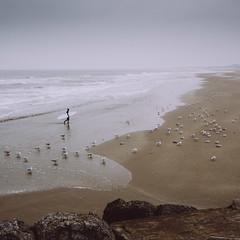 Wijk aan Zee (alowlandr) Tags: velsennoord northholland netherlands nl water sea land sky beach scenics nature horizon tranquility day tranquilscene nonurban sand birds seagulls animal outdoors surfer