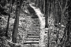 Up 135/2 (Svendborgphoto) Tags: monochrome manualfocus nikkor nikon nature nikkorais nikkorai nikond800 denmark d800 dof bw bokeh blackandwhite blur 1352 135mm woods tree stairs