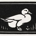 Duck (1923-1924) by Julie de Graag (1877-1924). Original from The Rijksmuseum. Digitally enhanced by rawpixel. thumbnail