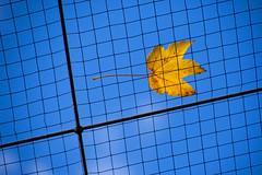 Leaves On The Grid (MarkusR.) Tags: d722758 mrieder markusrieder stuttgart germany wilhelma zoologischergarten zoo park botanischergarten zoologicalgarden botanicalgarden nikon d7200 nikond7200 herbst fall autumn leaves blätter grid gitter rost