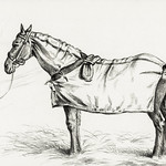 Horse standing in stable with blanket (1818) by Jean Bernard (1775-1883). Original from the Rijks Museum. Digitally enhanced by rawpixel. thumbnail