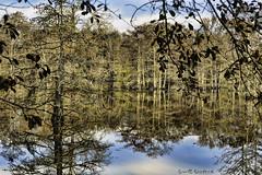 _MG_7080-Edit (Scott Sanford Photography) Tags: 6d canon cypress eos lake morning naturalbeauty naturallight nature outdoor reflection sunlight texas topazlabs water beautiful swamp trees ef24105mmf4lisusm martindiesjrstatepark