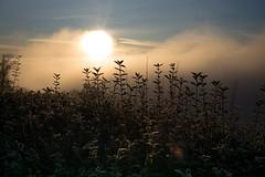 sunrise Uetliberg (Toni_V) Tags: m2409799 rangefinder digitalrangefinder messsucher leicam leica mp typ240 type240 35lux 35mmf14asphfle summiluxm hiking wanderung utokulm uetliberg dof bokeh sunrise sonnenaufgang nebelmeer fog nebel mist zurich zürich winter switzerland schweiz suisse svizzera svizra europe ©toniv 2018 181225