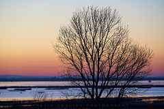 Yolo Basin Sunrise (Kevin English Photography) Tags: yolo basin sunrise california landscape water tree sony a7riii morning outside nature wildlife refuge sky