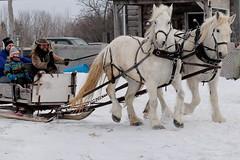 Deux_Chevaux (wordman760) Tags: canon digital slr eos rebel sl2 ef70200mmf4lisiiusm cloudy nuageux outdoors extérieur québec canada cheval horse percheron hiver winter mars march 2019 saintpatrick