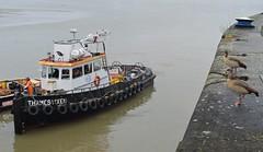 Thames Vixen (1) @ KGV Lock 30-12-18 (AJBC_1) Tags: royaldocks londonsroyaldocks london northwoolwich newham londonboroughofnewham eastlondon england unitedkingdom uk ship boat vessel tug tugboat pontoon livettsgroup dlrblog ©ajc nikond3200 ajbc1 gallionspoint bennettsbarges bennettstugs barge greatbritain gb docklands kgvlock kinggeorgevlock livettslaunches thamesvixen egyptiangeese londonwildlife