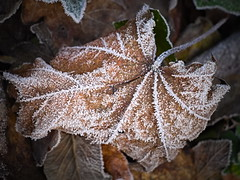 crispy leaf (koaxial) Tags: pc277449a leaf koaxial blatt frozen cold ice crystals ground autumn winter macro nature laub herbstlaub