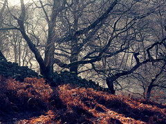 Winter woodland (northsky) Tags: winter wood trees wall bracken landscape colour outdoors mist
