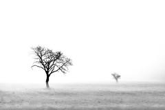 Fog Formation (pwendeler) Tags: fog mist foggy tree nature natur naturephotography naturfotografie landscape landschaft landscapephotography landschaftsfotografie sonyalphaa6500 sony bw blachandwhite black white schwarzweis mittelbuchen hanau germany