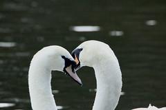 IMG_5134 (monika.carrie) Tags: monikacarrie wildlife scotland fyvie