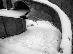 Way down (rsvatox) Tags: nocolor blackandwhite city saintpetersburg winter monochrome stairs snow