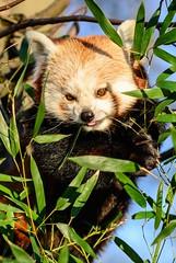 ©Kleiner Panda (Nikonfan-Fotografie) Tags: tierpark berlin tierparkberlin lichtenberg friedrichsfelde deutschland germany