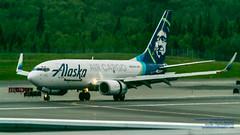 An Alaska Air Cargo Boeing 737-790(BDSF) Lands at Anchorage (AvgeekJoe) Tags: 100400mmf563 737 737790bdsf a82c98 alaska alaskaair alaskaaircargo alaskaairlines anchorageinternationalairport boeing737 boeing737790bdsf d5300 dslr msn30793 n626as nikon nikond5300 panc sigma sigma100400mmf563 sigma100400mmf563dgoshsmcontemporary usa airport lens telephotolens