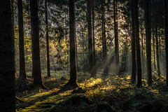forest series #163 (Stefan A. Schmidt) Tags: forest pentaxart autumn tree trees germany
