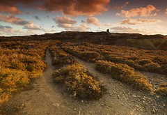 'Old mine road' (Meurig2011) Tags: parysmountain amlwch mine mountain heather road history anglesey coppermining northwales sky dawn windmill
