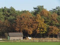 IMG_9061 (Momo1435) Tags: eindhoven brabant waalre herfst herfstkleuren netherlands autumn fall colors