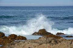 DSC_0249 (afagen) Tags: california pacificgrove asilomarstatebeach montereypeninsula asilomar beach pacificocean ocean