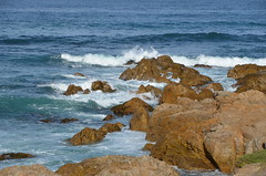 DSC_0241 (afagen) Tags: california pacificgrove asilomarstatebeach montereypeninsula asilomar beach pacificocean ocean