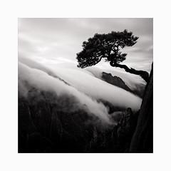 Xihai Grand Canyon (Frans van Hoogstraten) Tags: xihai westlake seaofclouds huangshanmountain huangshanpine clouds blackandwhite blackwhite landscapephotography landscape sky china anhui leica elmarit24mm m10p