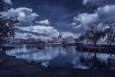Clouds Of December Over Lindo Lake (Bill Gracey 22 Million Views) Tags: infrared infraredphotography convertedinfraredcamera ir channelswapping lindolake lakeside clouds vegetation water sky highcontrast nature surreal composition reflections trees