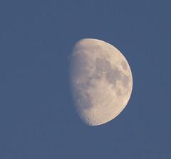 Luna in daylight (O.Sjomann) Tags: luna måne moon dagslys daylight canon7d canonef70300 arcticseasport naurstad løding tverlandet bodø bodoe nordland northernnorway norway nordnorge norge