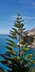 20181008_110505 (2) (kriD1973) Tags: europe europa italia italien italie italy campania kampanien campanie costiera amalfitana amalfi coast côte amalfitaine amalfiküste salerno salerne concadeimarini