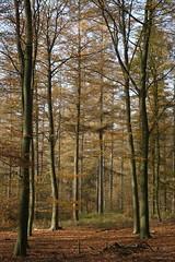 nuance_D711007 (Vogelmelk) Tags: veluwe bos herfst gelderland forest autumn nederland nature natuur