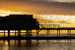 Aberystwyth starlings 2018 (1) (Explore) (babs pix) Tags: aberystwyth aberystwythpier starlingsaberystwythpier starlings murmuration cardiganbay sunset sunsetsea seaside westwales wales