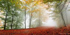 Misty autumn path (Mavroudakis Fotis) Tags: forest dreamscape autumn woods trees vivid foliage lush nature rays outdoors path road trunk colorful yellow greece europe destination traveling hikking mountain leaves