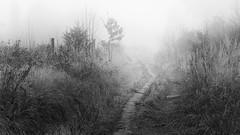 IMG_4464 (Calabrones) Tags: mignonbergeroswald deutschland oberbayern bayern münchen truderingerwald wald bäume nadelbäume nebel morgennebel