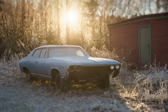 Frosty old Chevy (Helena Normark) Tags: oldchevy oldchevrolet oldcar frostycar bluechevy chevrolet chevy frost beautifulfrost winter heimdal trondheim sørtrøndelag norway norge sonyalpha7ii a7ii 50mm lensbaby edge50 lensbabyedge50 lensbabylove seeinanewway