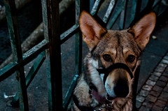 Photo (BadSoull) Tags: photo czech prague pet animal dog 2018 nikon d5100