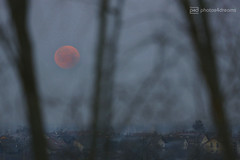 blood moon on monday (photos4dreams) Tags: totaleclipseofthemoon mondfinsternis finsternis mond vampire bloodmoon blood blutmond photos4dreams p4d photos4dreamz magicmoments moonstruck moon blut red rot