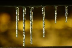 Icicles in evening light (evisdotter) Tags: icicles istappar evening kväll winter macro bokeh light nightshot sooc