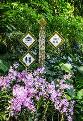 Signs (shashin62) Tags: singapore asia xt20
