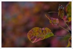 MMM10 (Outlaw Pete 65) Tags: macro closeup foglie leaves colori colours natura nature autunno autumn fujixe3 micronikkor55mm brescia lombardia italia