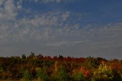 Fall full forward (johan van moorhem) Tags: hungary hongarije eger szilvasvarad autumn fall fallcolours herfstkleuren landscape