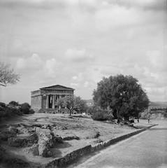 Tempio della Concordia (tommaso.piccoli) Tags: analogicait valledeitempli agrigento