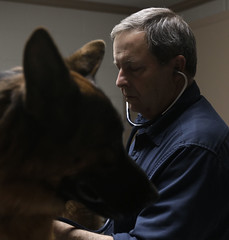 Dr. Robert H. Durham Jr., 59,  a third-generation veterinarian from Greensboro, Georgia, works on a prize winning German Sheppard. He runs a mixed animal practice but has been taking on more small animals since the dairy business has been declining.