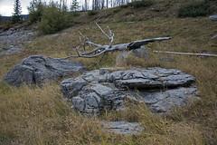 DSC_1981a (Markus Derrer) Tags: medicinelake markusderrer jaspernationalpark malignelakeroad fall september karst