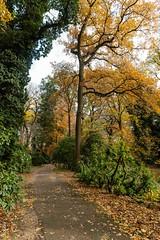 autumn18-5108 (clickraa) Tags: rombergpark dortmund herbst laub bäume farben indian summer
