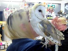 Guinevere,on Nicola's shoulder (billnbenj) Tags: barrow cumbria owl barnowl raptor birdofprey