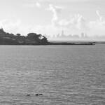 City with Ducks thumbnail