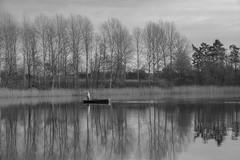 Boot auf See (Martin Stelter) Tags: wasser fotografie boot schwarzweis bäume mecklenburgvorpommern deutschland de