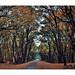 Macin mountains autumn forest