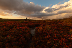 Fields of Red at Sunset (Ken Krach Photography) Tags: westvirginia dollysods